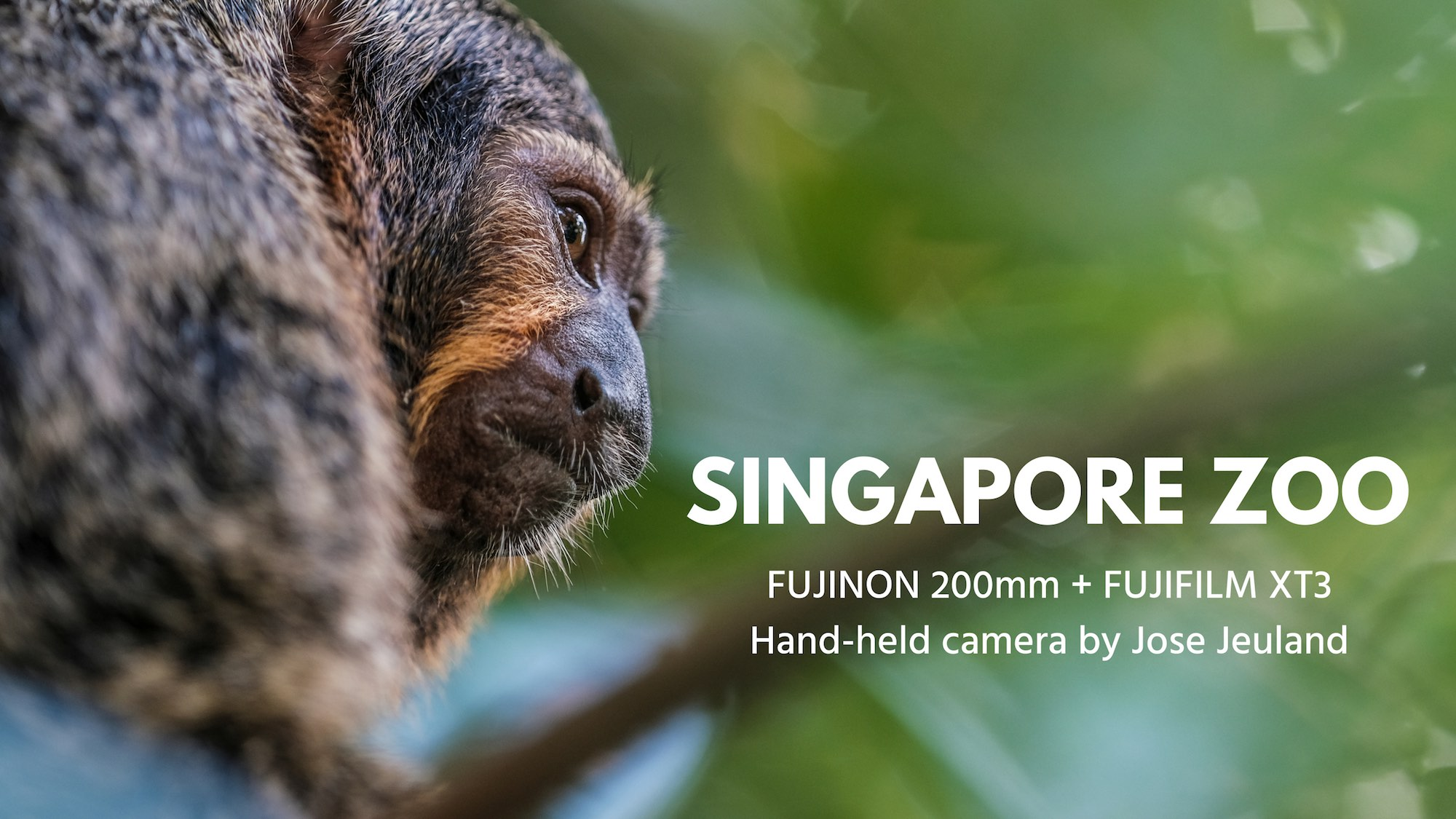 SINGAPORE ZOO video coco creative studio jose Jeuland