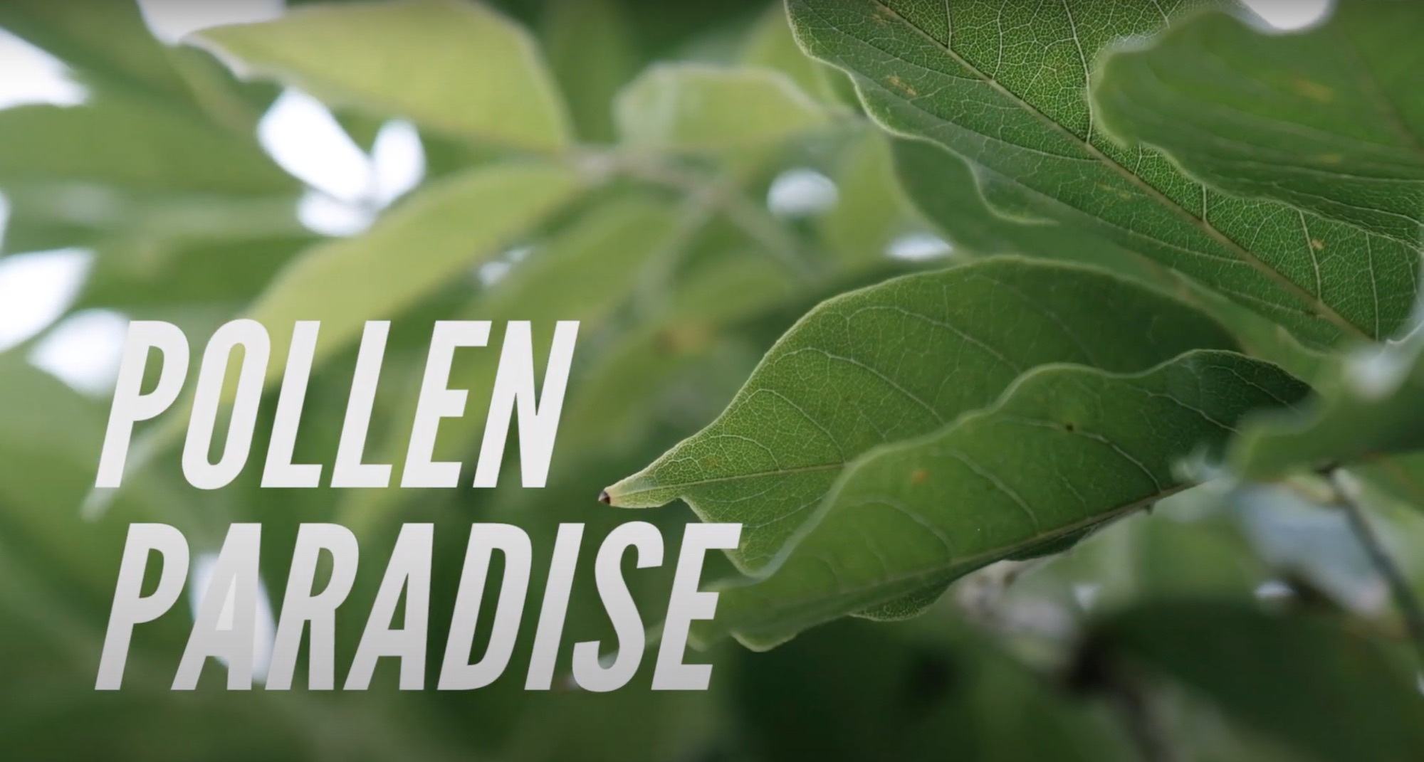 Screenshot Pollen paradise wildlife nature video production company in singapore coco creative studio