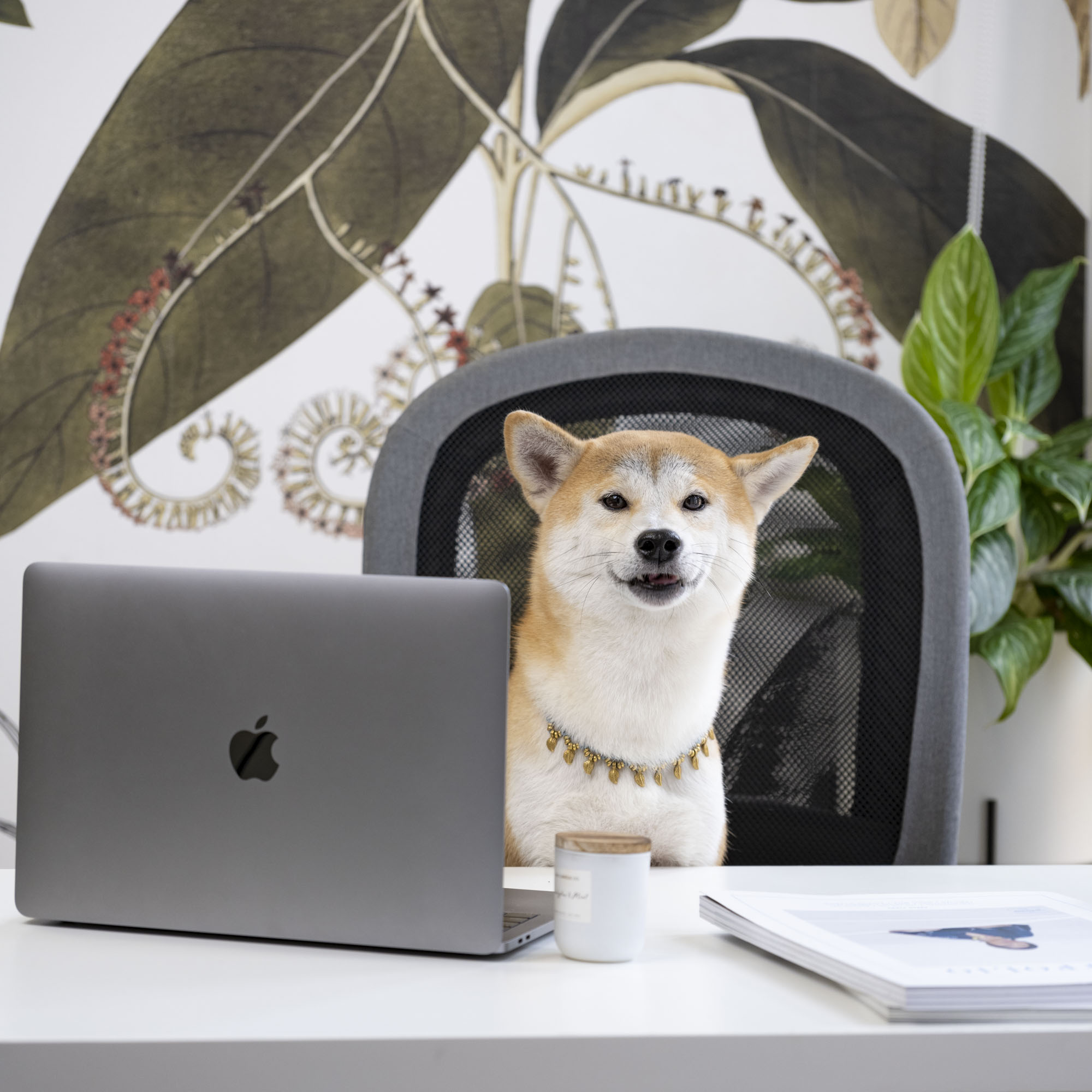 Corporate headshot portrait linkedin profil photography studio singapore services asia photographer coco pr agency shiba dog