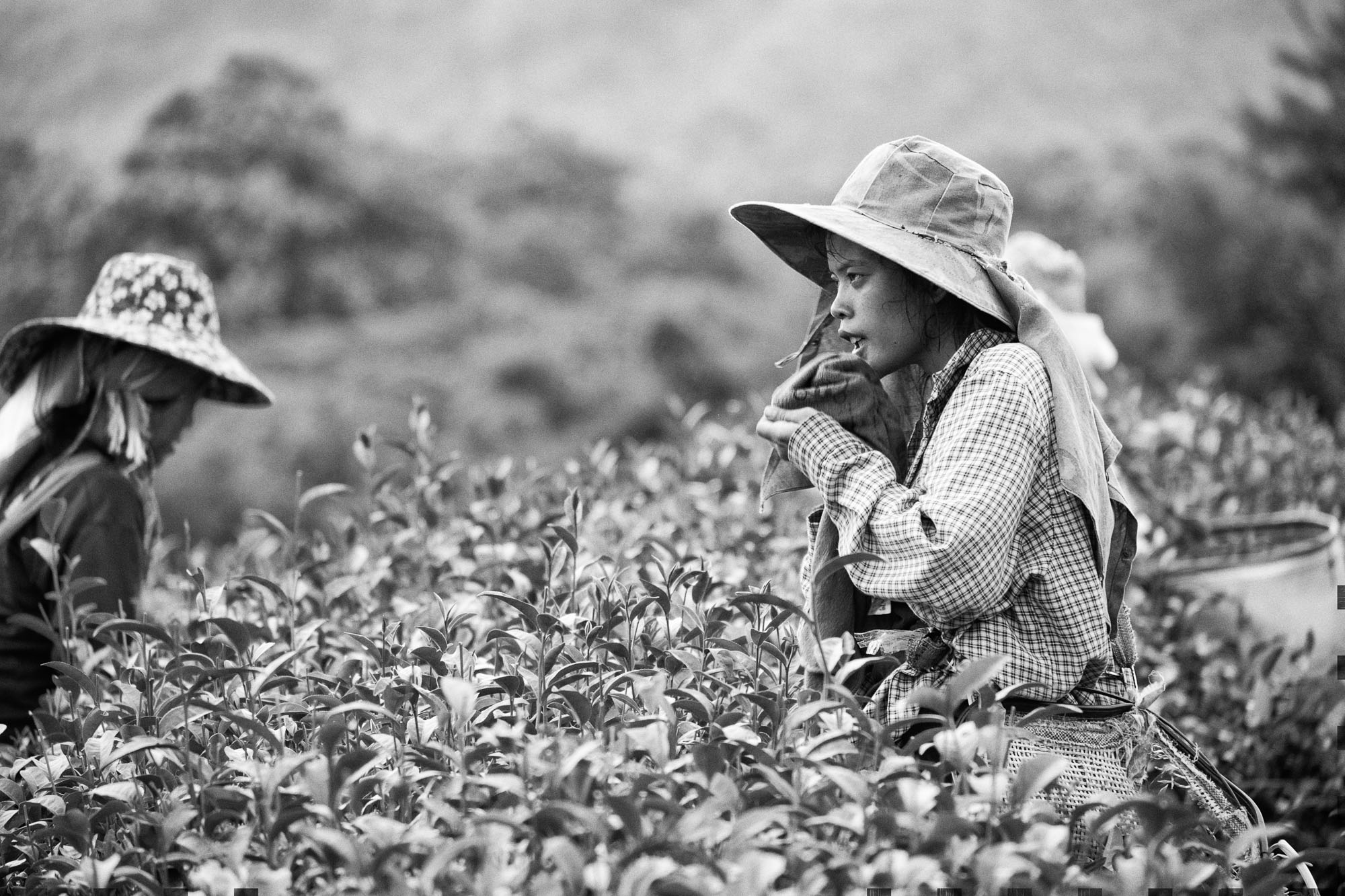 Thailand Reportage documentary photography photographer travel green tea